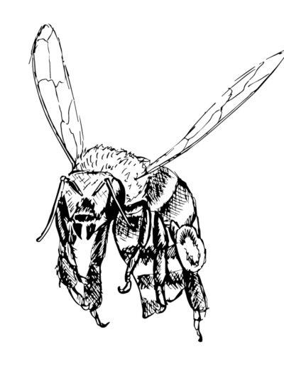 Bee-Sketch